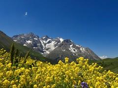 La Meije (French Alps) (Faapuroa) Tags: lautaret montagne mountain alps flower alpes fleurs nature couleur color nikon p1000 coolpix