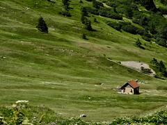 Tranquille (Faapuroa) Tags: lautaret montagne mountain alps flower alpes fleurs nature couleur color nikon p1000 coolpix