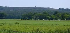 Still on our way to the Archemerberg, we are getting closer :) (joeke pieters) Tags: 1470761 panasonicdmcfz150 archmerberg lemelerberg salland overijssel nederland netherlands holland wandelsprendalfsenommen2 landschap landscape landschaft paysage