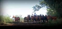 Un alto en el camino (Eduardo Amorim) Tags: cavalos caballos horses chevaux cavalli pferde caballo horse cheval cavallo pferd cavalo cavall tropilla tropilha herd tropillas tropilhas 馬 حصان 马 лошадь crioulo criollo crioulos criollos cavalocrioulo cavaloscrioulos caballocriollo caballoscriollos ayacucho provinciadebuenosaires buenosairesprovince argentina sudamérica südamerika suramérica américadosul southamerica amériquedusud americameridionale américadelsur americadelsud eduardoamorim gaucho gauchos gaúcho gaúchos
