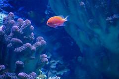 Aquarium of the Pacific (Dvann562) Tags: aquarium aquariumofthepacific california park beach lumix long downtown pacific shoreline olympus panasonic omd em10 em10iii