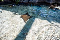 Aquarium of the Pacific (Dvann562) Tags: aquariumofthepacific aquarium pacific downtown long beach shoreline park california olympus omd em10iii em10 panasonic lumix