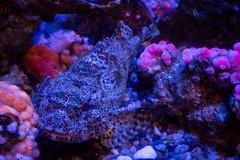Aquarium of the Pacific (Dvann562) Tags: aquariumofthepacific california park beach aquarium long downtown pacific shoreline olympus panasonic omd em10 em10iii lumix