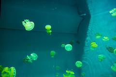 Aquarium of the Pacific (Dvann562) Tags: beach aquarium long downtown pacific aquariumofthepacific california park lumix shoreline olympus panasonic omd em10 em10iii