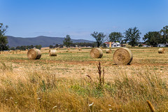 Farm Life (Jared Beaney) Tags: canon6d canon photography photographer travel australia australian landscapes landscape victoria yarravalley wine region country yarraranges regional melbourne farm haybales hay