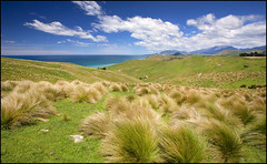 Coastal breeze (katepedley) Tags: kekerengu kaikoura coast coastline southisland south island newzealand new zealand aotearoa nz marlborough marlboroughnz canon 5d 1740mm polariser tussock rural ruralnz farm pasture hills green grass