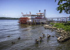 River Rose (jsleighton) Tags: newburgh hudson river waterfront rose geese driftwood landscape