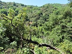 Rancho San Antonio (PenangCA) Tags: ranchosanantonio california summer outdoor hiking trail permanentecreektrail lowermeadowtrail highmeadowtrail wildcatlooptrail trees green inventyouradventure snapshotsunday landscape