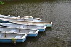 奈良公園・鷺池 ∣ Nara park 【EXPLORED】 (Iyhon Chiu) Tags: 日本 奈良 nara japan japanese 奈良公園 鷺池 pond 池 boat 船