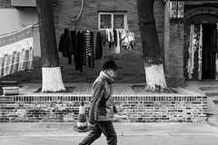 Between the trees (Go-tea 郭天) Tags: pékin républiquepopulairedechine beijing hutong narrow alley ancient old history historical historic traditional tradition pavement building construction trees lines laundry clothes dry drying bricks man cold winter sun sunny cap walk walking movement alone lonely street urban city outside outdoor people candid bw bnw black white blackwhite blackandwhite monochrome naturallight natural light asia asian china chinese canon eos 100d 24mm prime frame framed