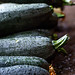 Green zucchini with drops of water lying on the ground