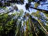 Hältingträsk, East-Helsinki 🌴🌴 (Esa Suomaa) Tags: suomi scandinavia helsinki finland forest trees tree saveourtrees oldforest darkforest planetearth earth europe olympusomd