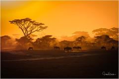 Days End ~ Lake Ndutu Marshes (doctorharrison) Tags: africa ndutu sunset