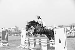 IMG_3033M Jump (陳炯垣) Tags: sport horse outdoors horsemanship taiwan 馬術 台灣 潭子