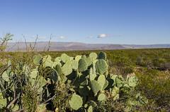 Dagger Mountain (rschnaible) Tags: big bend national park texas outdoor landscape dagger flat prickly pear cactus