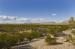 Southern Texas (rschnaible) Tags: big bend national park texas outdoor landscape dagger flat