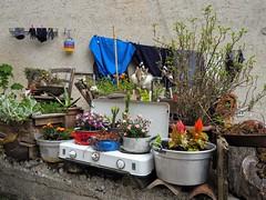 Cucina e piante (leosagnotti) Tags: gatto cat cucina vasi piante abruzzo pentole