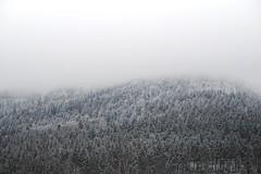 Black Forest (olga.hernes) Tags: forest black schwarzwald winter fog trees