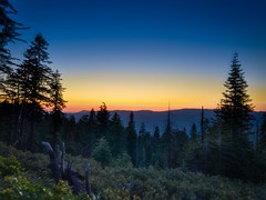 Forest sunset (World-viewer) Tags: travel trees sunset mountains nature beautiful night landscape evening amazing ngc meadow explore nationalgeographic forest nationalpark yosemite ambient arboreal supershot mobile plus iphone iphone8 iphone8plus