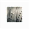 Wildflower 2 (Charlie Pragnell) Tags: 7artisans olympusuk squareformat fineartphotography fineart wildflower wwwcharlespragnellphotographynet