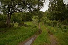 ...green winter.... (KvikneFoto) Tags: tamron nikon kulturlandskap kvikne hedmark norge natur