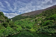 Landscape with the shadow of forest fire.  Cabe river joins Sil river in front of San Estevo de Sil (Jano_Calvo) Tags: lugo sil sanestebo ourense galicia bridge river cabe water bank forest trees green mountain canyon countryside rural train rail fire burn trail sony a6000 ilce alpha 1650mm