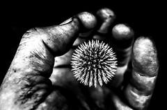 release (Gerrit-Jan Visser) Tags: bewerkt hand release sharp cut freedom let go pain releave