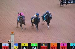 "2018-11-02 (17) r7 on the tote board - Kevin Gomez on #3 Rare Eagle for the win (JLeeFleenor) Tags: photos photography md marylandracing maryland marylandhorseracing equine outside outdoors laurelpark laurelracecourse jockey جُوكِي ""赛马骑师"" jinete ""競馬騎手"" dżokej jocheu คนขี่ม้าแข่ง jóquei žokej kilparatsastaja rennreiter fantino ""경마 기수"" жокей jokey người horses thoroughbreds equestrian cheval cavalo cavallo cavall caballo pferd paard perd hevonen hest hestur cal kon konj beygir capall ceffyl cuddy yarraman faras alogo soos kuda uma pfeerd koin حصان кон 马 häst άλογο סוס घोड़ा 馬 koń лошадь"