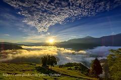 日出時分 (Benz Yu) Tags: 日出 朝陽 藍天白雲 雲海 茶園 武界 雲海的故鄉 山岳 樹木 風景 星芒 nikon1424mmf28g