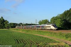 W du matin (Lion de Belfort) Tags: train chemin de fer ligne 3 l3 alsace ostheim guémar sncf tgv carmillon inoui réseau 500 513 champ maïs