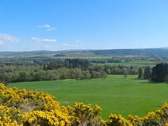 View from Balliemore, near Abriachan, Inverness - shire, April 2019 (allanmaciver) Tags: balliemore highlands inverness shire abriachan gorse yellow coconut field green shades allanmaciver