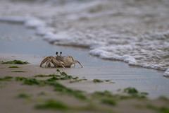 Eyes Up (JeffMoreau) Tags: savage neck dunes natural preserve virginia