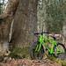 A Bike In The Woods