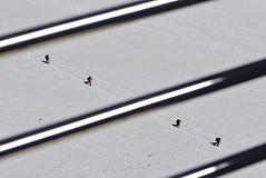 two by two (davide.alberani) Tags: courmayeur monte bianco montebianco mont blanc montblanc skyway funivia cableway helbronner punta glacier snow val daosta aosta mountain montagna alpinismo ghiacciaio climbing sony a6000