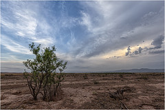 Tarde de Campo (Fernando Forniés Gracia) Tags: españa aragón zaragoza calatorao naturaleza campo airelibre nubes cielo árbol landscape paisaje