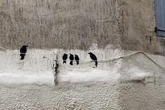 Birds on a Wire (just.Luc) Tags: birds oiseaux vogels vögel graffiti grafitti streetart urbanart wall muur mur mauer montpellier hérault occitanie okzitanien france frankrijk frankreich francia frança monochrome monochroom monotone
