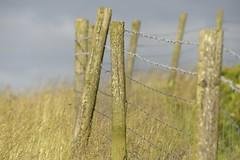 Fencing (Tony Tooth) Tags: nikon d600 sigma 50500mm fence fencing roadside gunhill swythamley staffs staffordshire