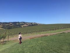 Navarro Vineyards (mariamjaan) Tags: philo mendocino travel mariam