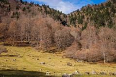 El camino que sube (SantiMB.Photos) Tags: 2blog 2tumblr 2ig artigadelin esbòrdes valldaran valdaran otoño autumn montañas mountains pirineos pyrenees lleida bosque forest cascada waterfall geo:lat=4267928589 geo:lon=070546650 geotagged bordeses cataluna españa