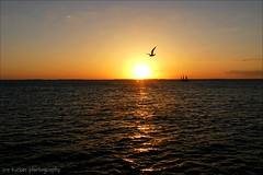 Unless someone like you cares a whole awful lot.... (itucker, thanks for 5+ million views!) Tags: florida keywest sunset ocean reflection silhouette
