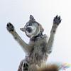 Underdog - Skimo (Moopix.nl) Tags: siberian husky huskies dog dogs canine doglovers underdog sleddog snowdog