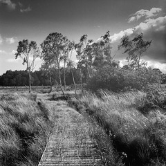 Board walk on Strensall Common (jhotopf) Tags: