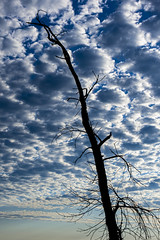 Silhouette of the past life (runningman1958) Tags: nikon d7200 nikond7200 ottawariver clouds deadtree tree silhouette nature