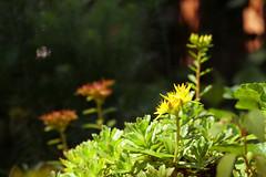 Ground Cover (andrickthistlebottom) Tags: flowers plants flickrfriday groundlevel shrubbery dof depthoffield