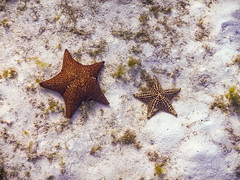 star fish on the ocean bottom-1 (b.campbell65) Tags: animal beautiful beauty biology caribbean colorful fish formations island isolated landscape marine national natural nature ocean outdoors park reef scenic scuba sea swim tourism travel tropical underwater water wet