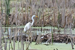 DSC_5140 (adamsdale616) Tags: northern color beauty nature animal wildlife outdoor waterfront wisconsin • dusk autumn golden water pond sky light new usa spring summer animals birds midwest colorful landscape nikon d7200 reflection detail closeup