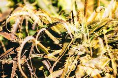 You're Not Quite Lovers and You're Not Quite Friends (Thomas Hawk) Tags: america arizona desertbotanicalgarden papagopark usa unitedstates unitedstatesofamerica cacti cactus desert phoenix fav10