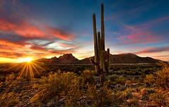 Tonto Sunset (ChrisFloresRAW) Tags: cactus desert sunsets saguaro sonorandesert arizonadesert tontonationalforest arizonasunset dessertsunset sunrays desertscene