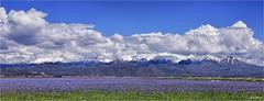Idaho Centenial Marsh (jerrywb2010) Tags: idaho landscape marsh mountains clouds flora