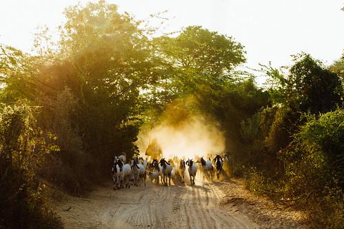 Goat Herder on Dusty Road, Bagan Myanmar